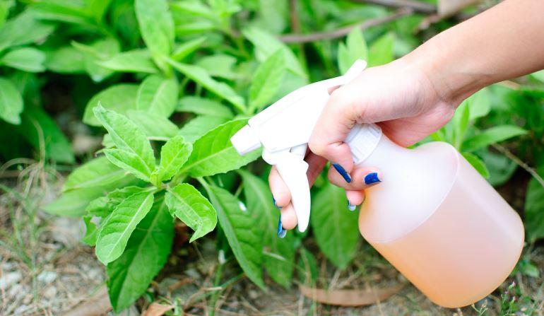 Мыльный раствор от тли в саду