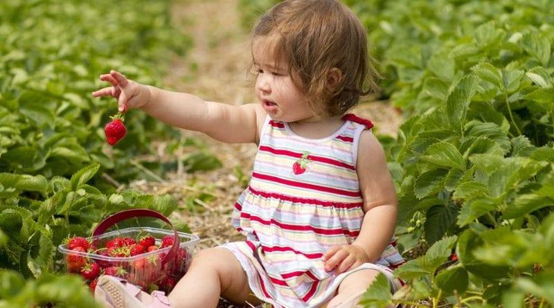 Пятно от клубники: 7 советов выведения свежих и застаревших пятен