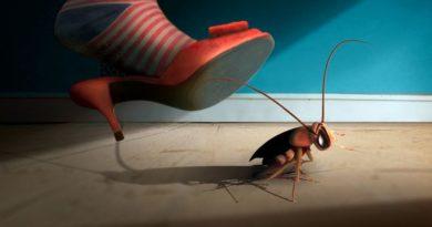 7 способов дезинфекции квартиры от тараканов
