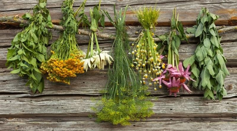 Как правильно собирать и сушить травы