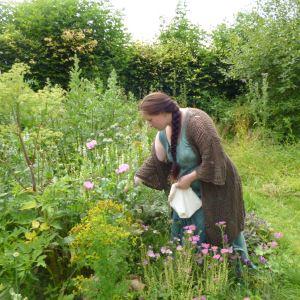 Где собирать травы