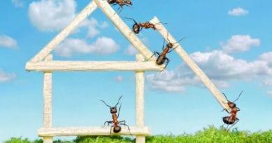 Гель от муравьев