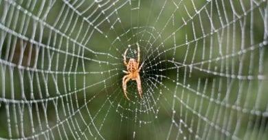 Виды домашних пауков