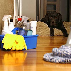Средства для выведения запаха собачьей мочи