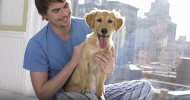 Как избавиться от запаха собачьей мочи в доме