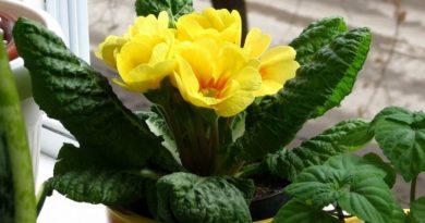 Как вывести мошек из комнатных цветов