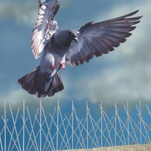 Избавление от голубей на крышах или чердаках