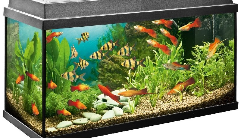 Biological balance - a pledge of the purity of your aquarium