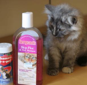 Первый банный день: купаем котенка