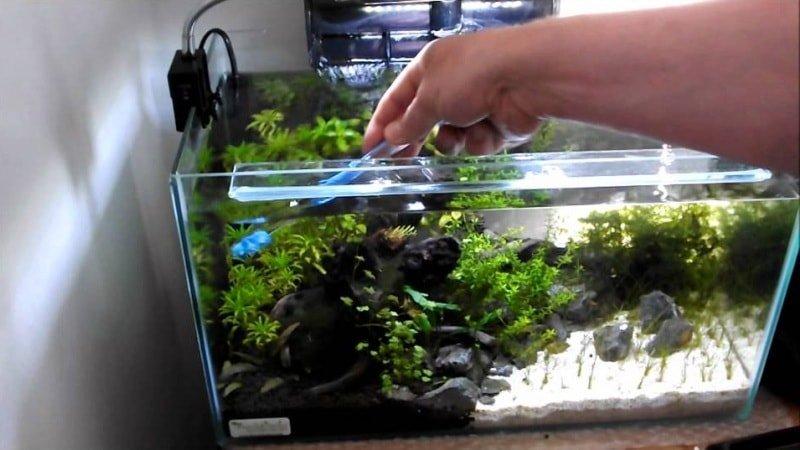 Как чистить аквариум