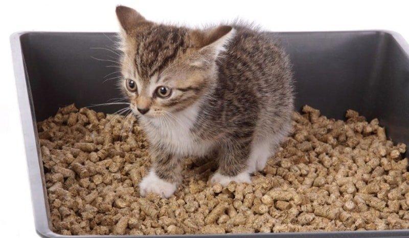 Приучить кота к лотку