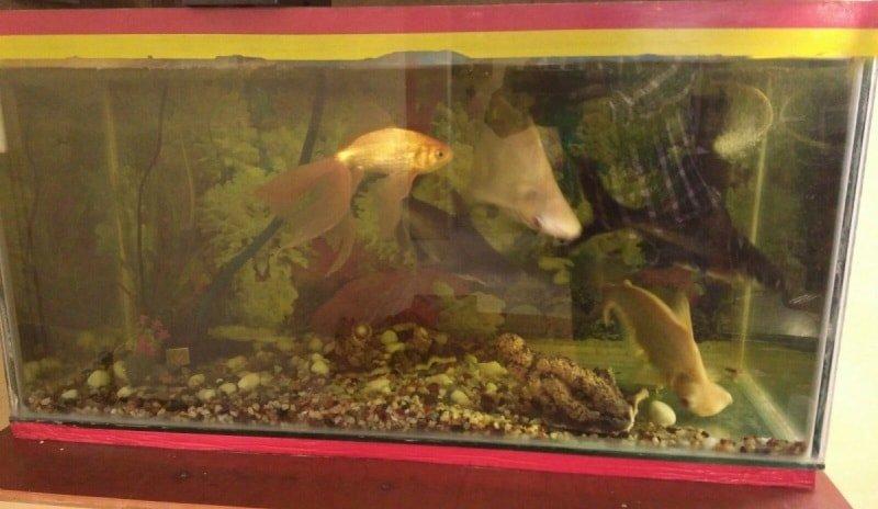 Наиболее частые проблемы при содержании аквариума