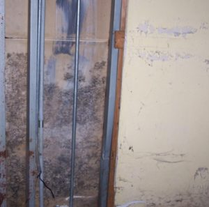 Влага, как основная причина возникновения грибка в квартире