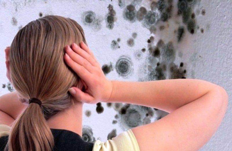 Чем лечить грибок на стенах