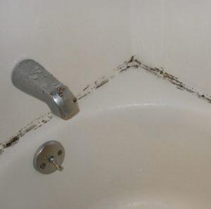 Практичные советы, как защитить стены от появления грибка