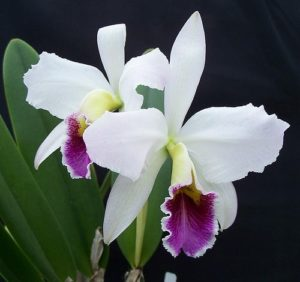 "Orchid's ""kids"": where they come from and what to do"