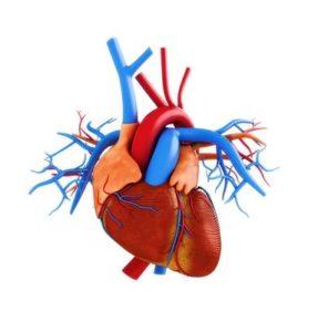 Повышение гемоглобина: причины и симптомы