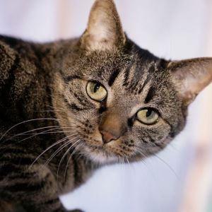 Признаками инсульта у кошки могут быть