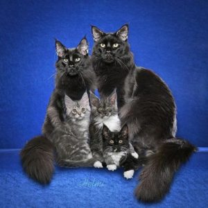 Cat with kittens in a dream