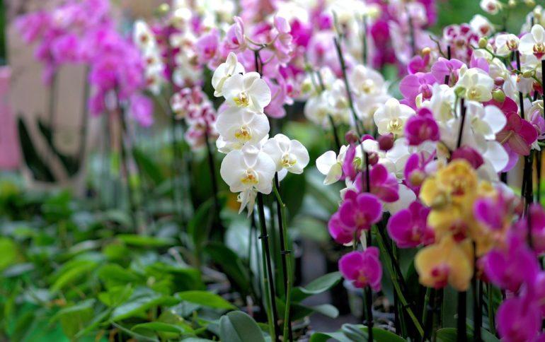 Выбор и покупка цветка