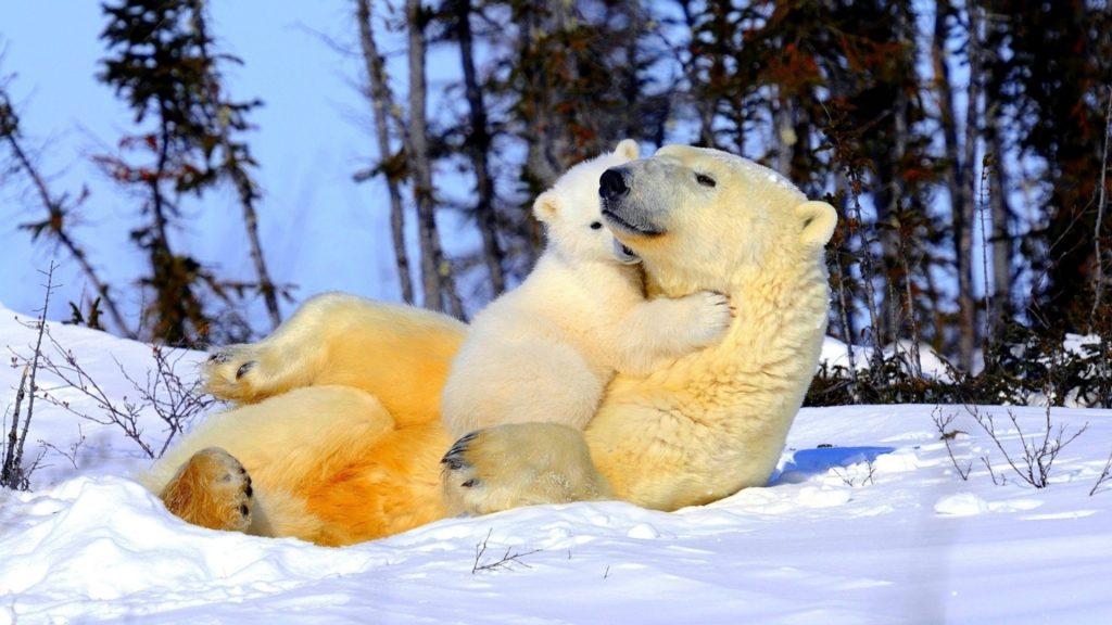 Сонник медведь к чему снится женщине беременной