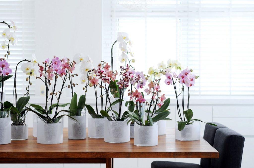 Правила ухода за орхидеей
