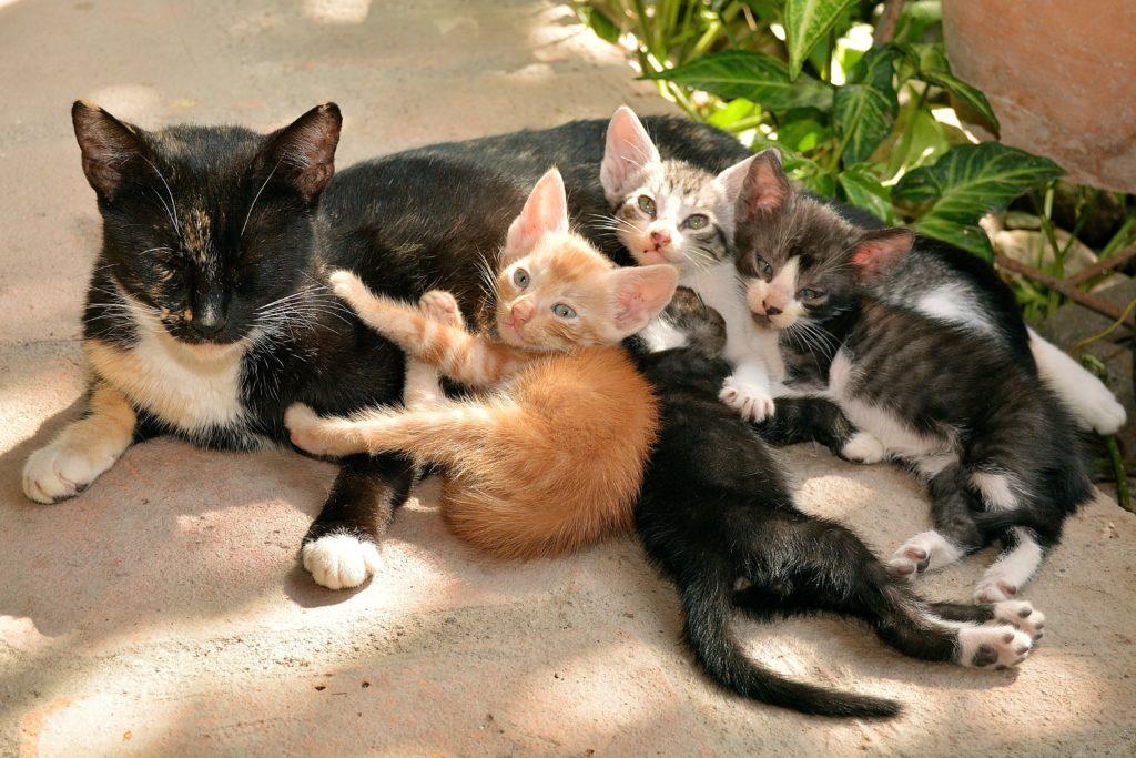 Кошка с котятами во сне
