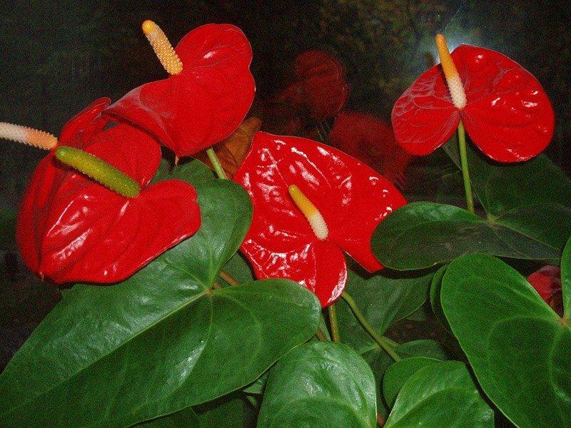 Цветы, легкие в использование