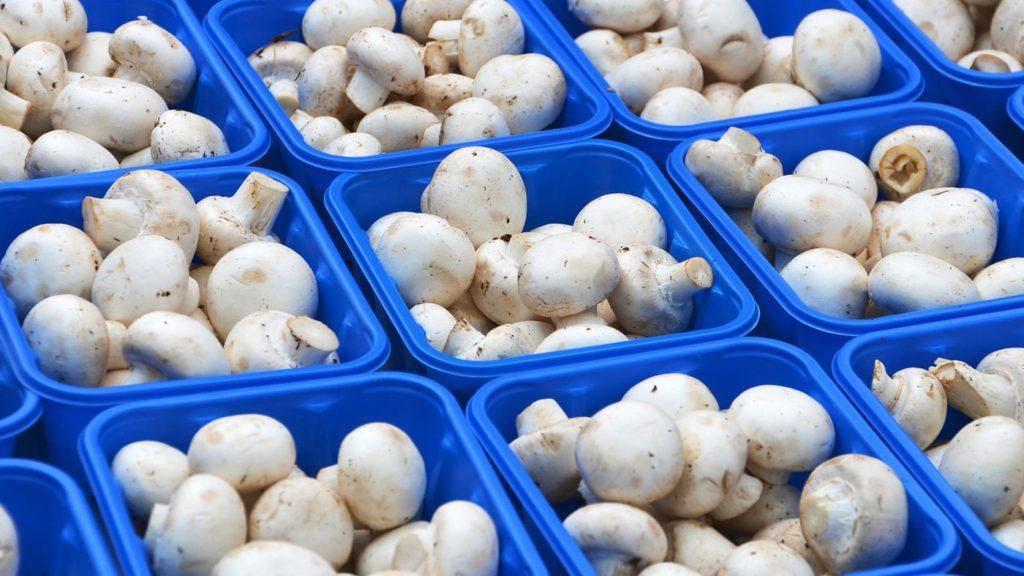 Где можно выращивать грибы?
