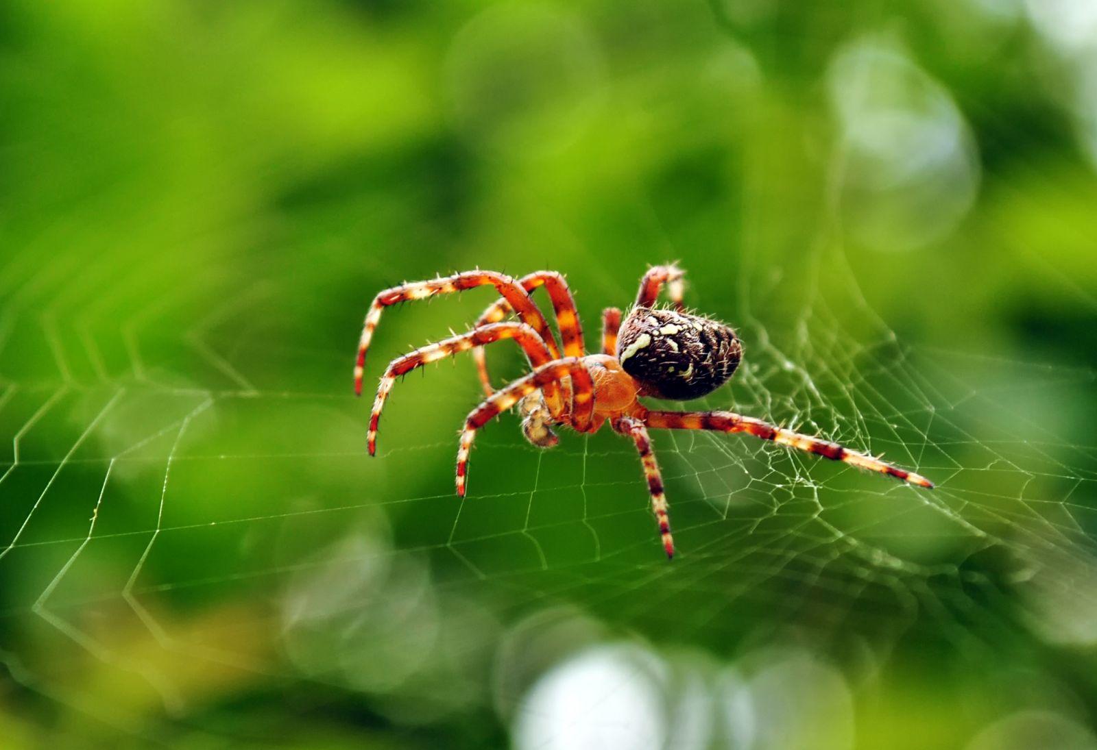 Снится паук