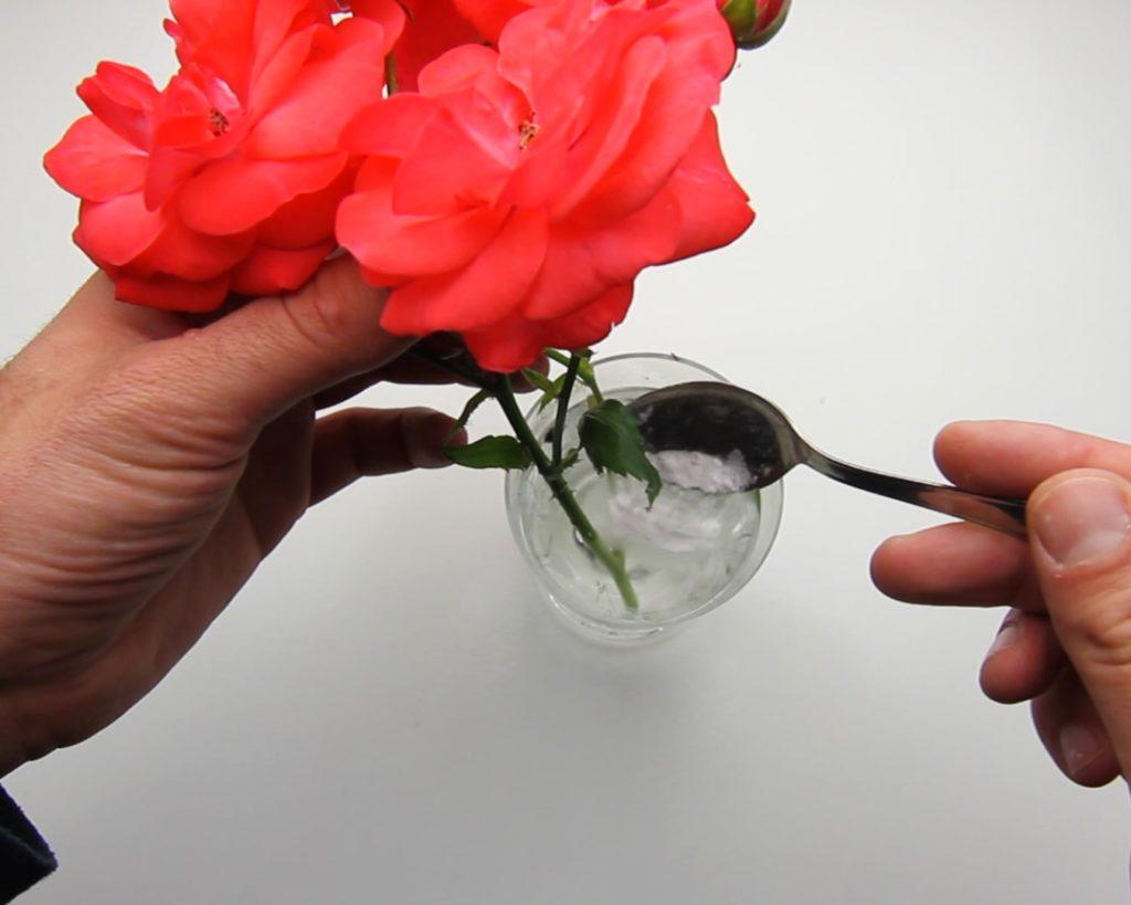 Продлить свежесть роз