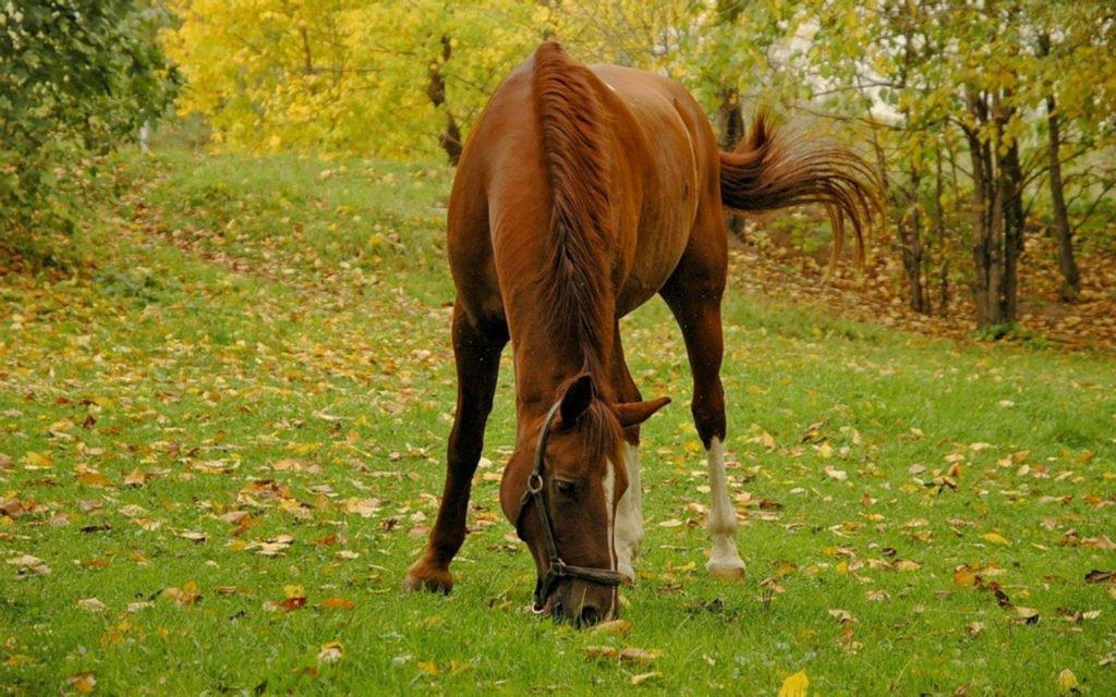 Видеть пасущуюся лошадь