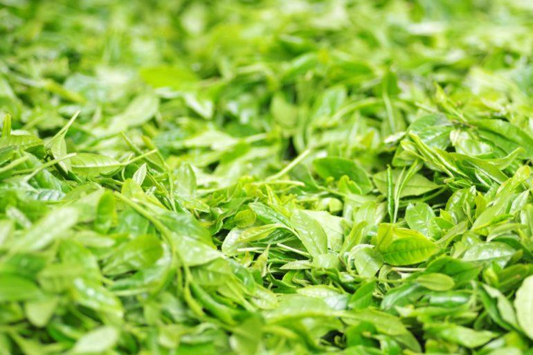 Лучшие сорта зелёного чая