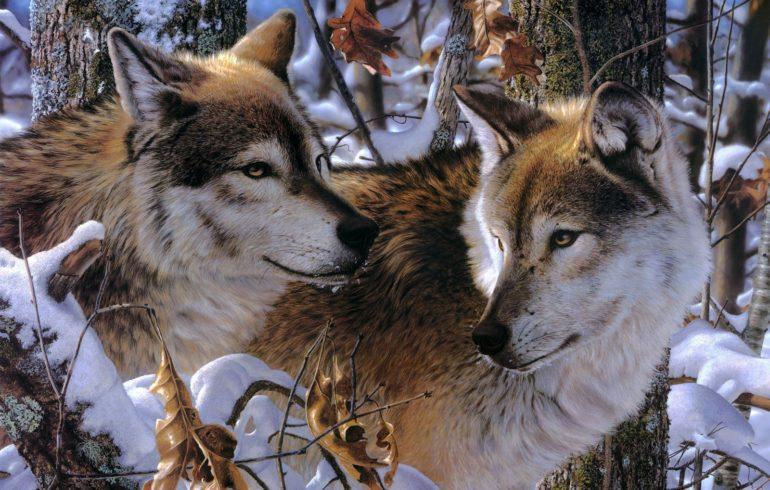 Почему приснился волк особенности толкования по сонникам