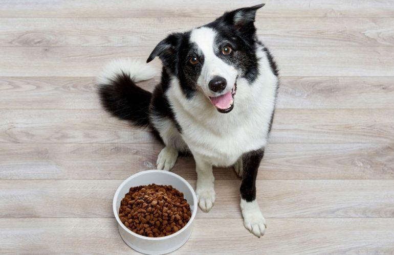 Корм для собак – лучшая альтернатива домашней пищи