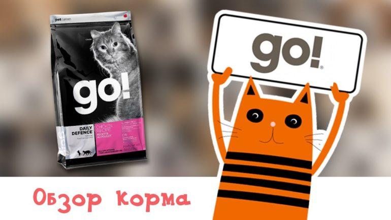 Лучшие корма для кошек класса холистик