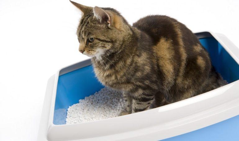 Советы владельцам кошек