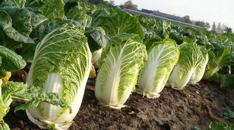 Способы приготовления салата