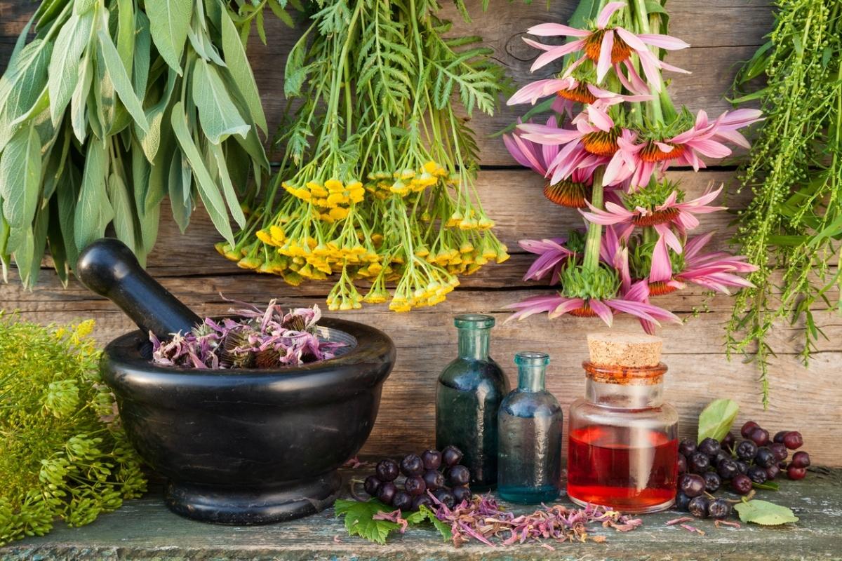 Мочегонные травы: список, рецепты