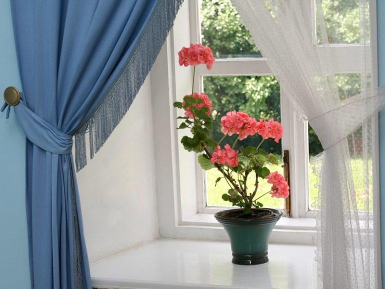 Как ухаживать за геранью в домашних условиях?