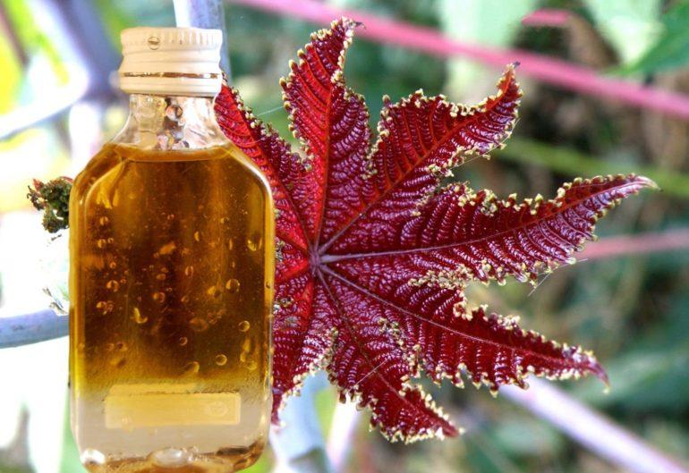 Как изготавливают касторовое масло?