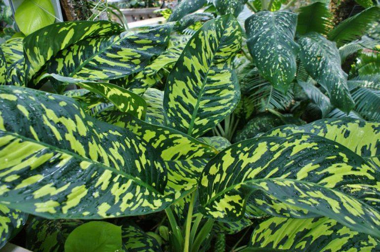 Виды и сорта растения