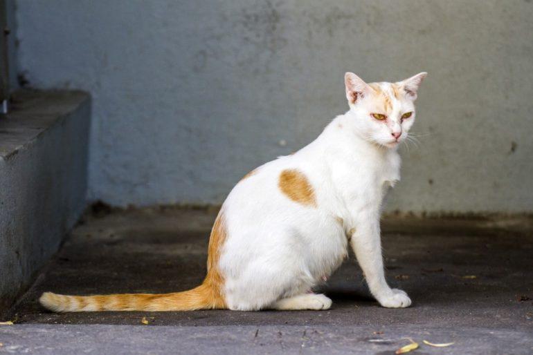 Особенности лечения у беременной кошки