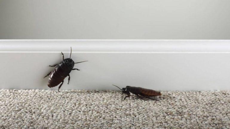 Эффективны ли народные средства от тараканов в квартире?