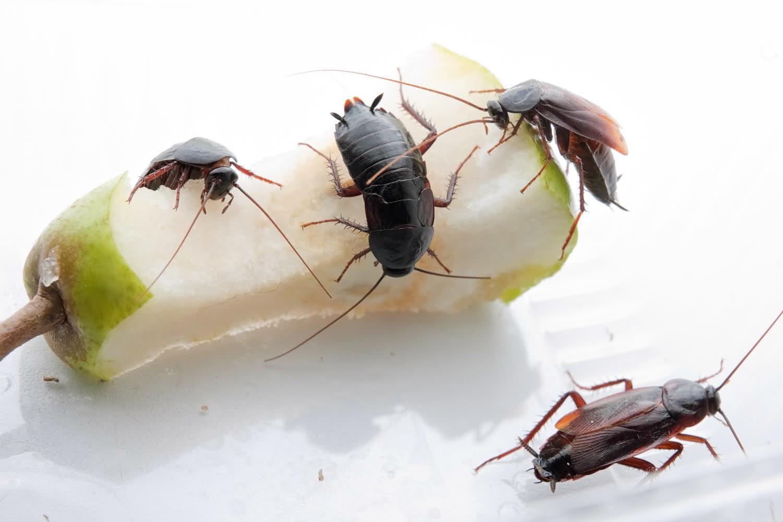 ОТРАВА для тараканов – самая эффективная отрава купить