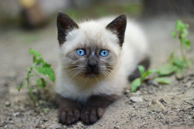 Советы по выбору котёнка