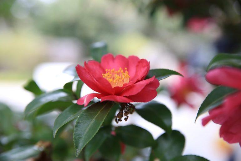 Растения для незамужних женщин