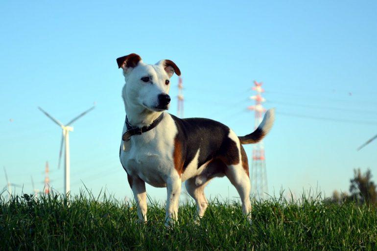 Размеры собаки
