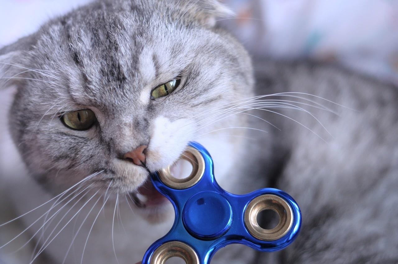 Почему кошки кусаются