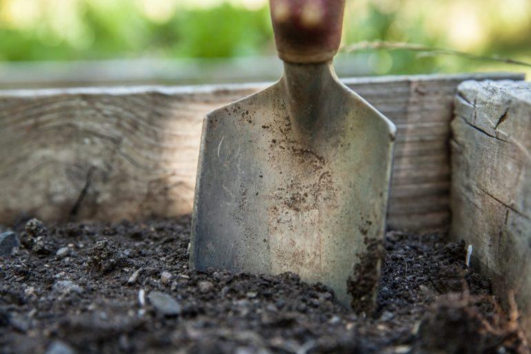 Правила посадки гортензии садовой